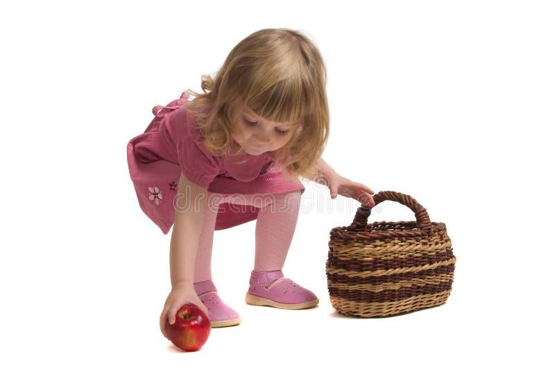 Versammlungsäpfel des kleinen Mädchens. stockfotografie