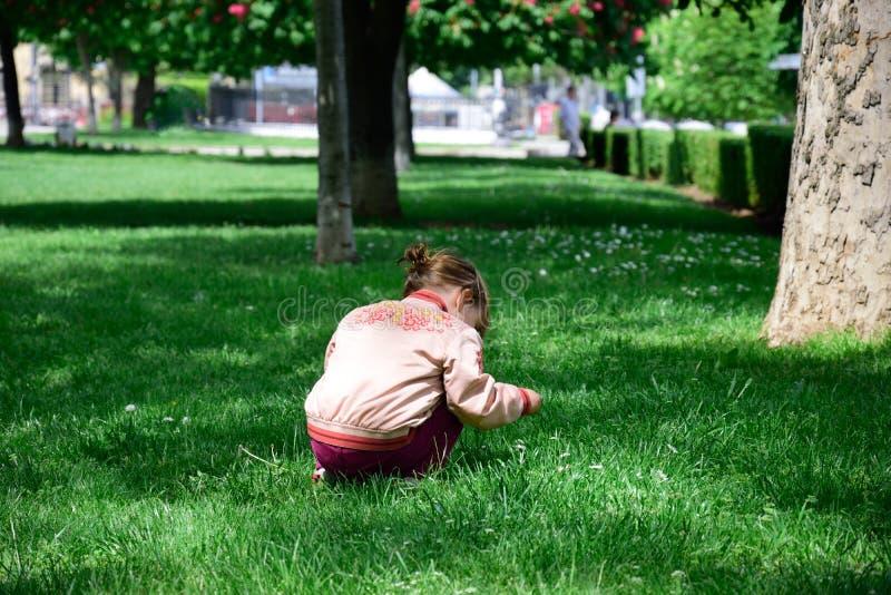 Versammlungsblumen des kleinen Mädchens lizenzfreie stockfotografie