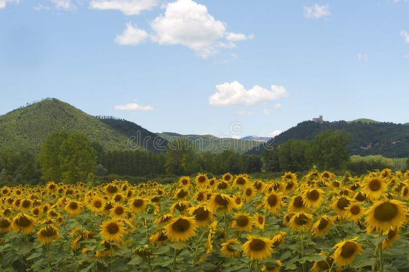 Verschönern Sie zwischen Lazio und Umbrien landschaftlich stockbilder