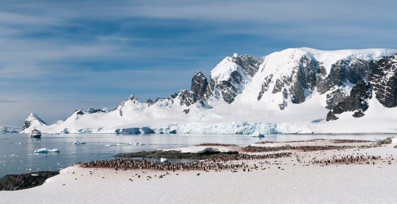 Verschachtelung Gentoo-Pinguinkolonie, Cuverville-Insel, mit touristischem Schiff im Errera-Kanal, antarktische Halbinsel stockfotografie
