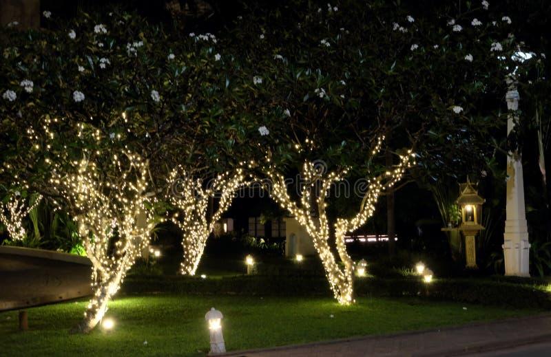 Verscheidene bloeiende die bomen, met decoratieve lichten worden verfraaid Witte bloemen De sc?ne van de nacht royalty-vrije stock foto's