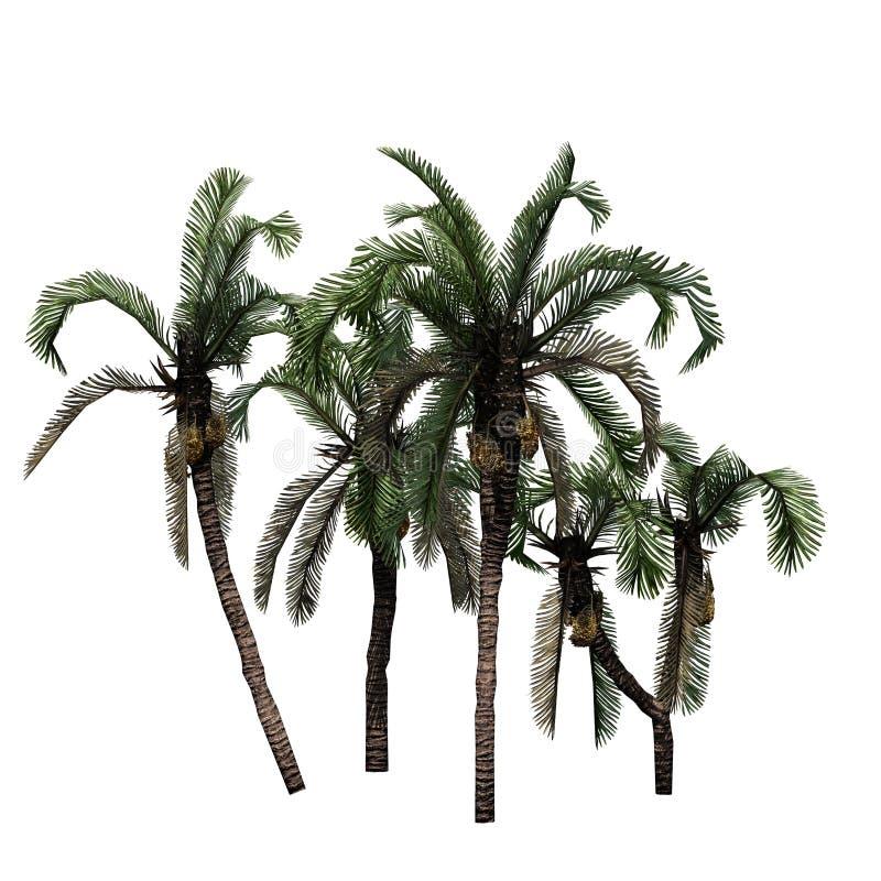 Verscheidene dateren Palmen royalty-vrije illustratie