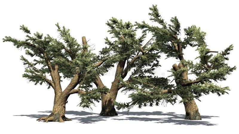 Verscheidene diverse Ceder van de bomen van Libanon vector illustratie
