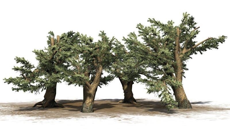 Verscheidene diverse Ceder van de bomen van Libanon stock illustratie