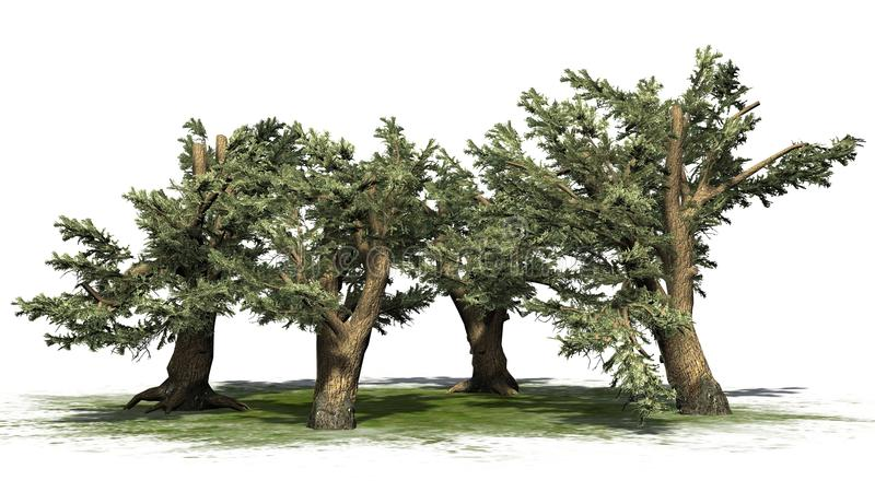 Verscheidene diverse Ceder van de bomen van Libanon royalty-vrije illustratie
