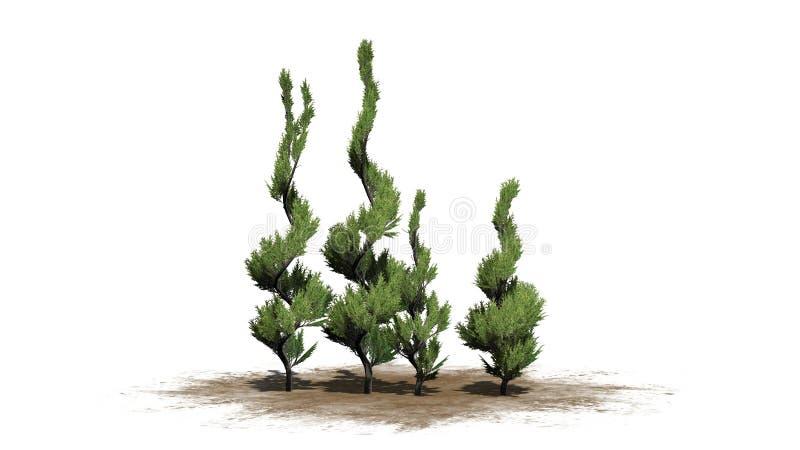 Verscheidene diverse Jeneverbessen Topiary bomen royalty-vrije illustratie