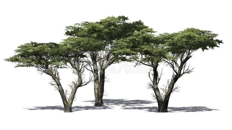 Verscheidene diverse Monterey-Cipresbomen vector illustratie