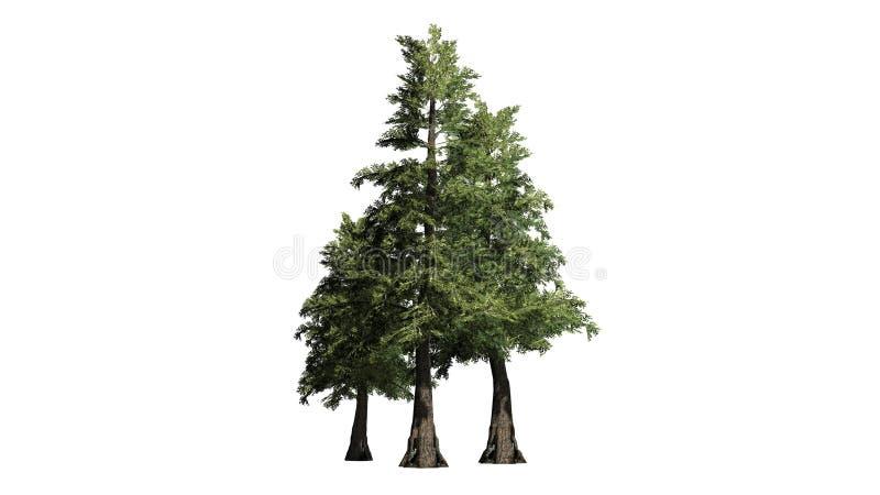 Verscheidene diverse Westelijke Rode Cederbomen royalty-vrije illustratie