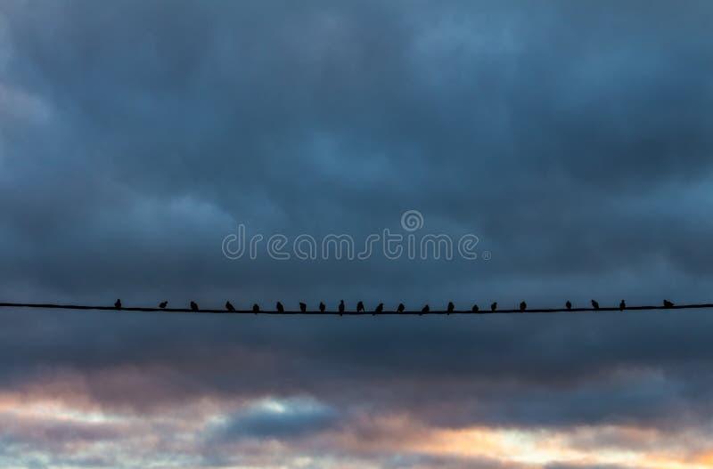 Verscheidene duiven die zich op een kabel tijdens zonsondergang bevinden royalty-vrije stock foto's