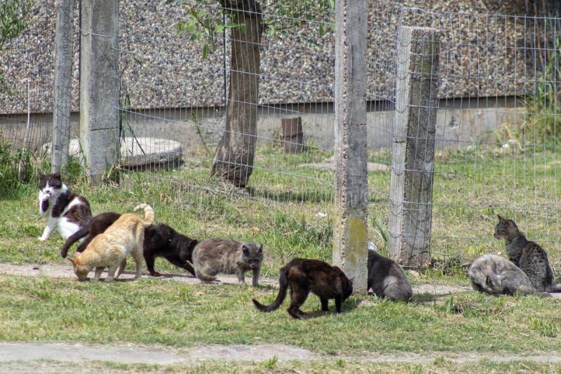 Verscheidene katten die in de binnenplaats eten stock foto