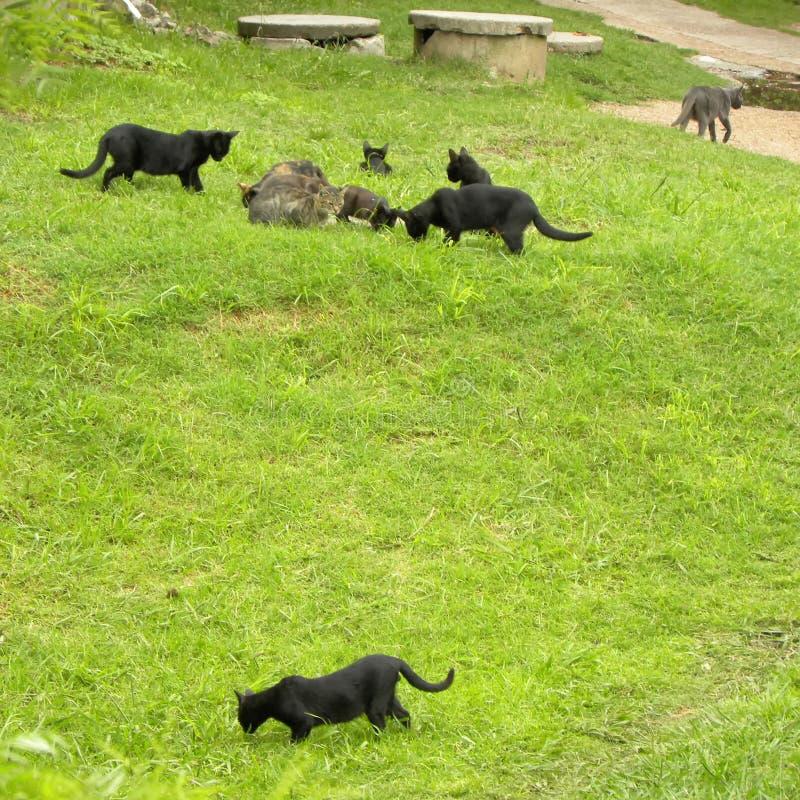 Verscheidene katten op het gras royalty-vrije stock afbeelding
