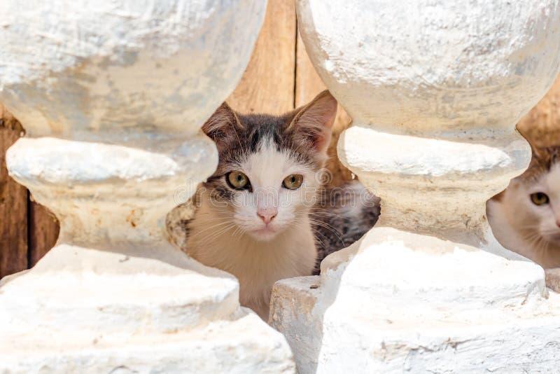 Verscheidene kleine katjes die in de kelderverdieping leven stock afbeeldingen
