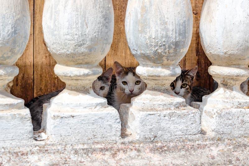 Verscheidene kleine katjes die in de kelderverdieping leven stock foto's