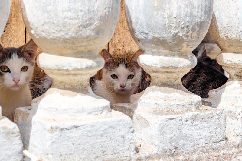 Verscheidene kleine katjes die in de kelderverdieping leven stock afbeelding