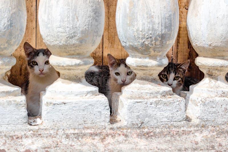 Verscheidene kleine katjes die in de kelderverdieping leven royalty-vrije stock foto's