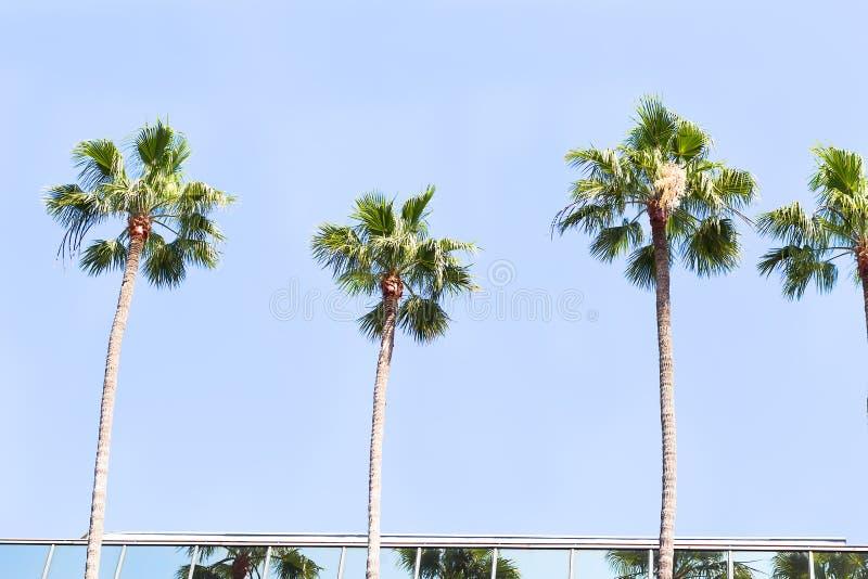 Verscheidene palmen tegen de blauwe hemel en aangestoken door de zon in CIT stock foto's