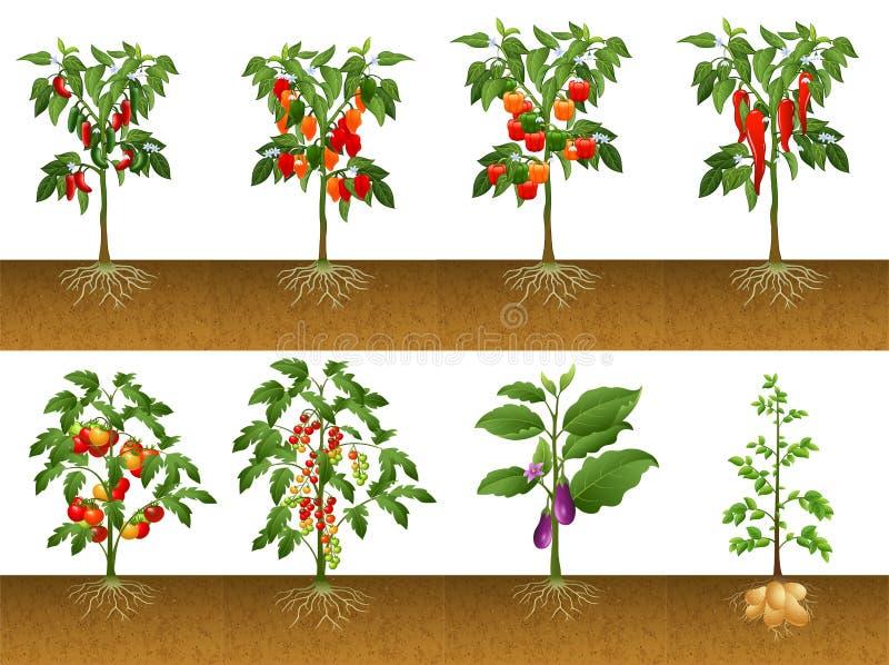 Verscheidene planten inzamelingen stock illustratie