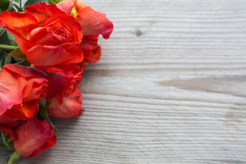 Verscheidene rode verse rozenhoofden royalty-vrije stock afbeeldingen