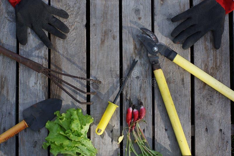Verscheidene tuinieren hulpmiddelen en oogst op een houten achtergrond op een de zomerdag in het dorp stock fotografie