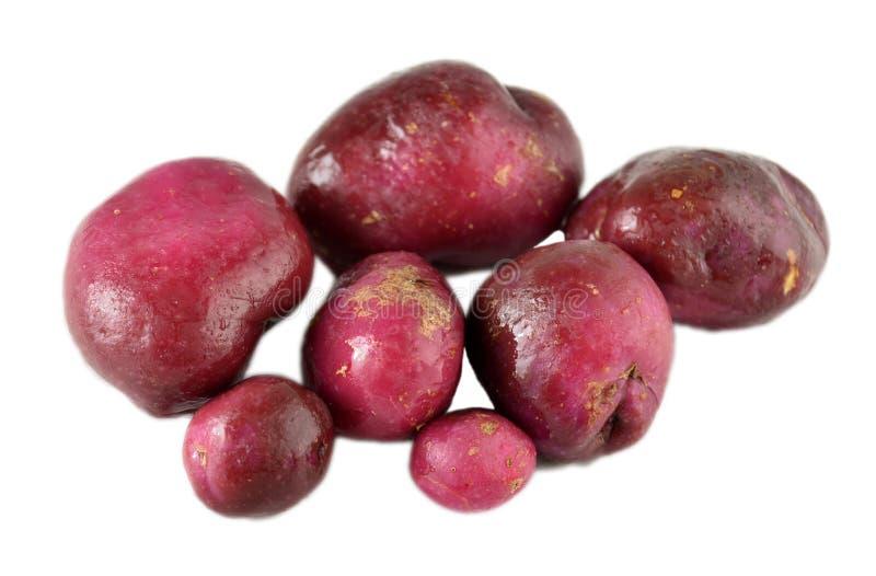 Verscheidenheid van aardappels royalty-vrije stock afbeelding