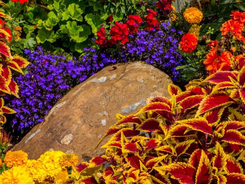Verscheidenheid van Bloemen in een Tuin royalty-vrije stock afbeelding