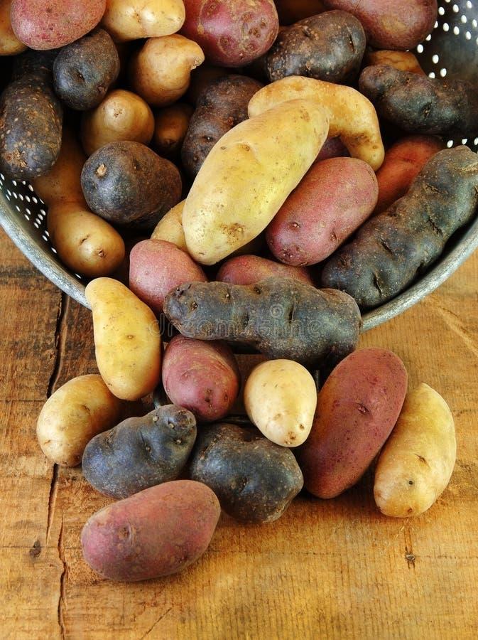 Verscheidenheid van de Aardappels van de Jonge vis in Vergiet stock foto's