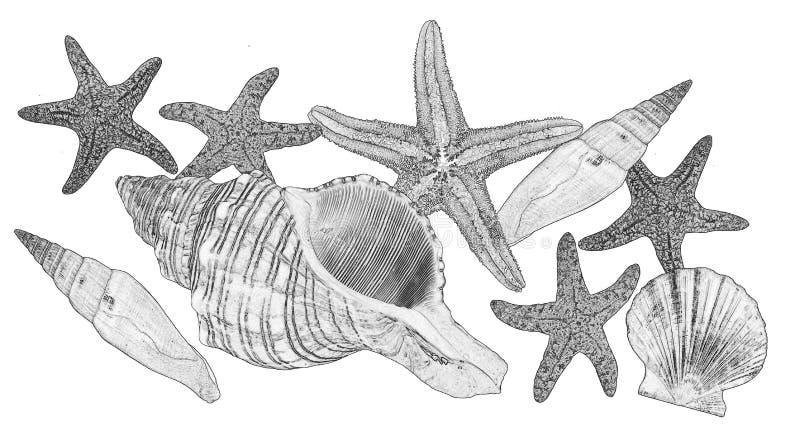 Verscheidenheid van overzeese shells op zwart-wit vector illustratie