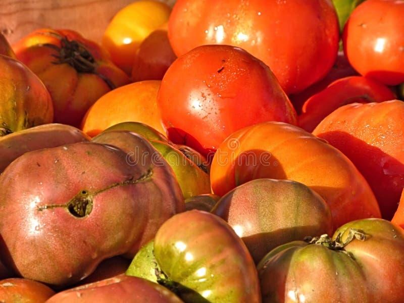 Verscheidenheid van tomaten in een kleinhandelsvertoning royalty-vrije stock afbeelding