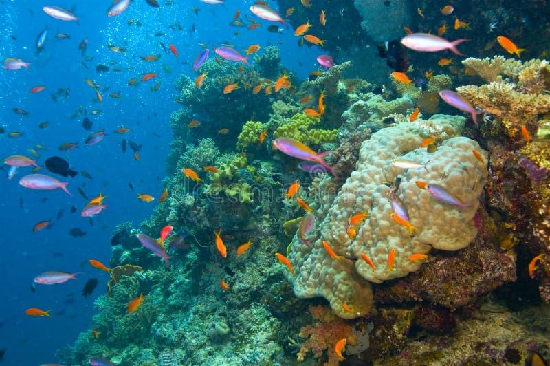 Verscheidenheid van van vissen en koraal royalty-vrije stock afbeelding