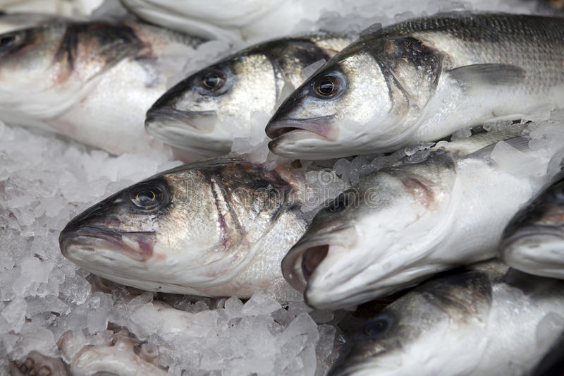 Verscheidenheid van verse vissenzeevruchten in markt stock fotografie