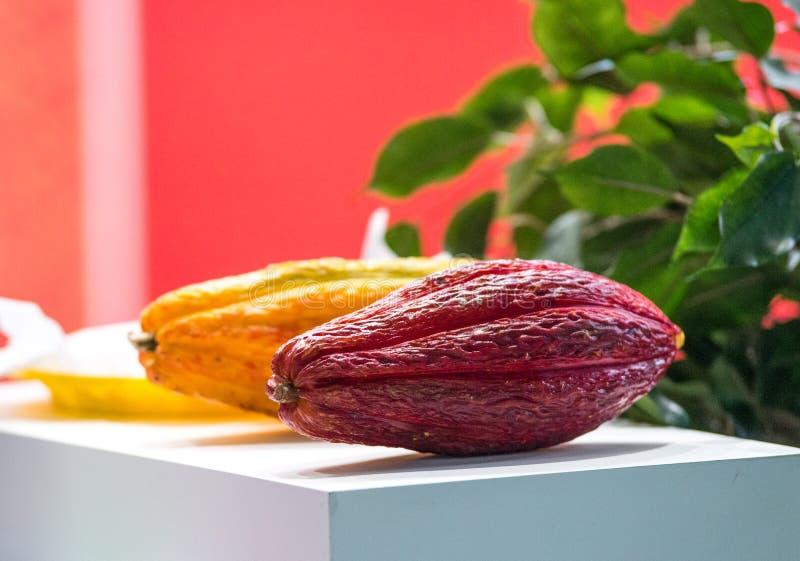 Verschieden von den frischen Kakaofrüchten auf dem Tisch stockfotografie
