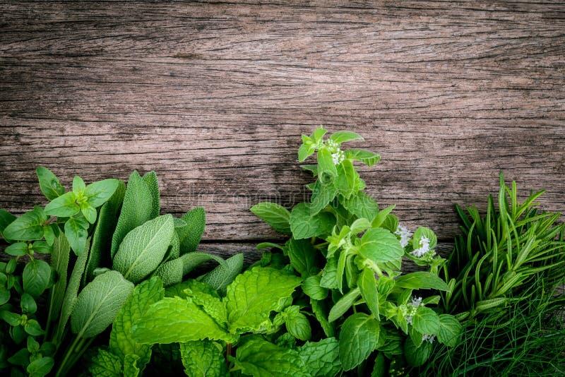 Verschiedene aromatische Kräuter und Gewürze vom Garten grünen Minze, fenne lizenzfreie stockfotografie
