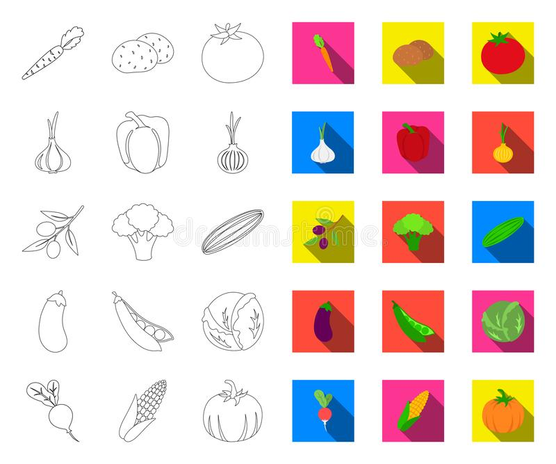 Verschiedene Arten des Gemüseentwurfs, flache Ikonen in gesetzter Sammlung für Entwurf r lizenzfreie abbildung
