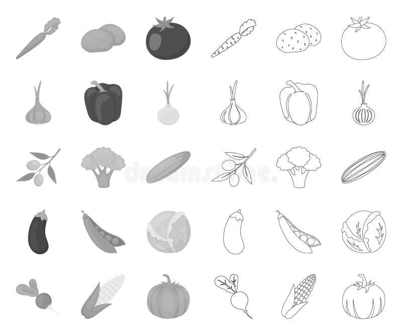 Verschiedene Arten des Gemüses mono, Entwurfsikonen in gesetzter Sammlung für Entwurf r vektor abbildung