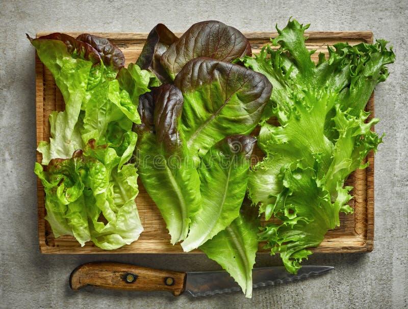 Verschiedene Arten des Kopfsalates lizenzfreies stockbild