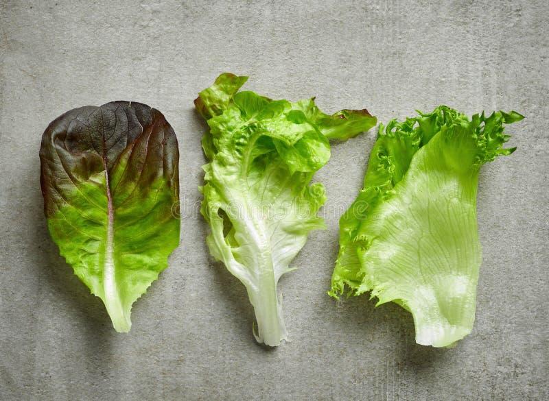 Verschiedene Arten des Kopfsalates stockfotografie
