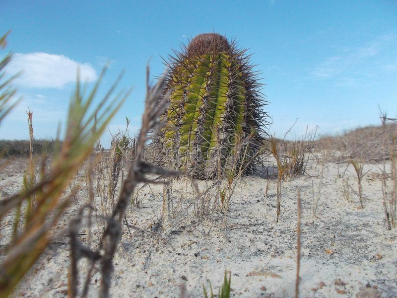 Verschiedene Arten, Spezies und Klassen des Kaktus und seiner Bearbeitung stockfotos