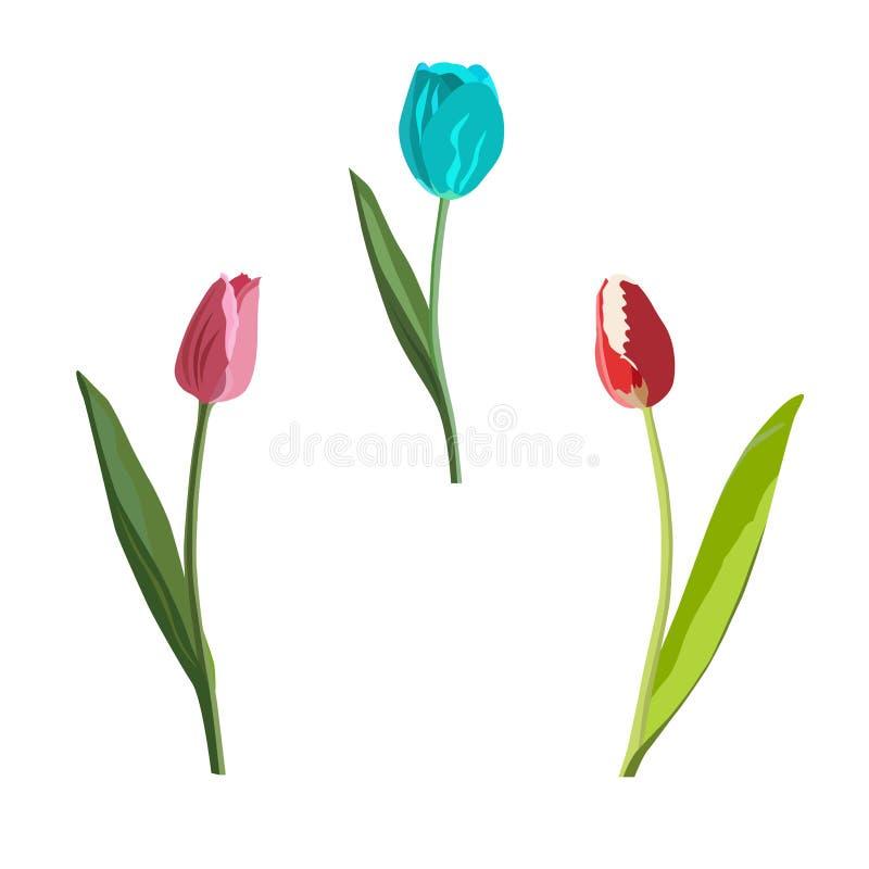 Verschiedene Arten und Farben der bunten Tulpen stock abbildung
