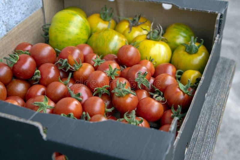 Verschiedene Arten von gereiften Tomaten in einem Kasten, rote Früchte nach Ernte, geschmackvolle Nahrung, essfertig stockbilder