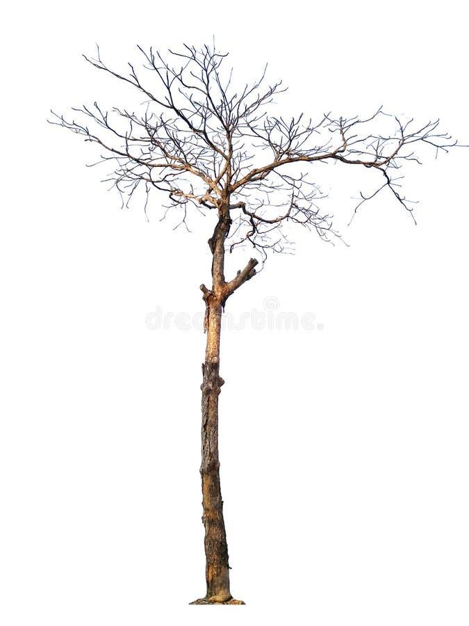 Verschiedene Bäume von Thailand, Sammlung stellten kein ein 19 lokalisiert auf weißem Hintergrund lizenzfreies stockbild