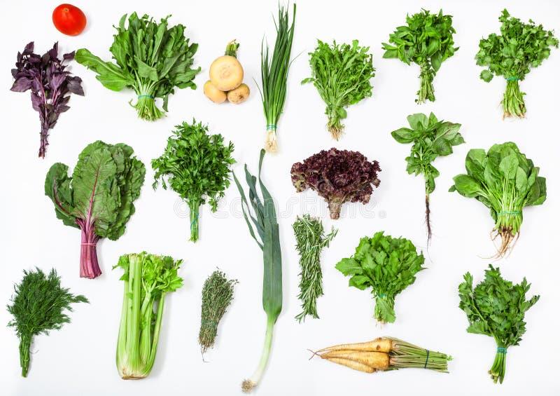 Verschiedene Bündel der frischen kulinarischen Gräser stockbild