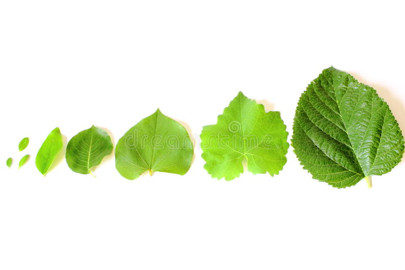 Verschiedene Baum-Blätter stockbild. Bild von farbe, frech - 25276293