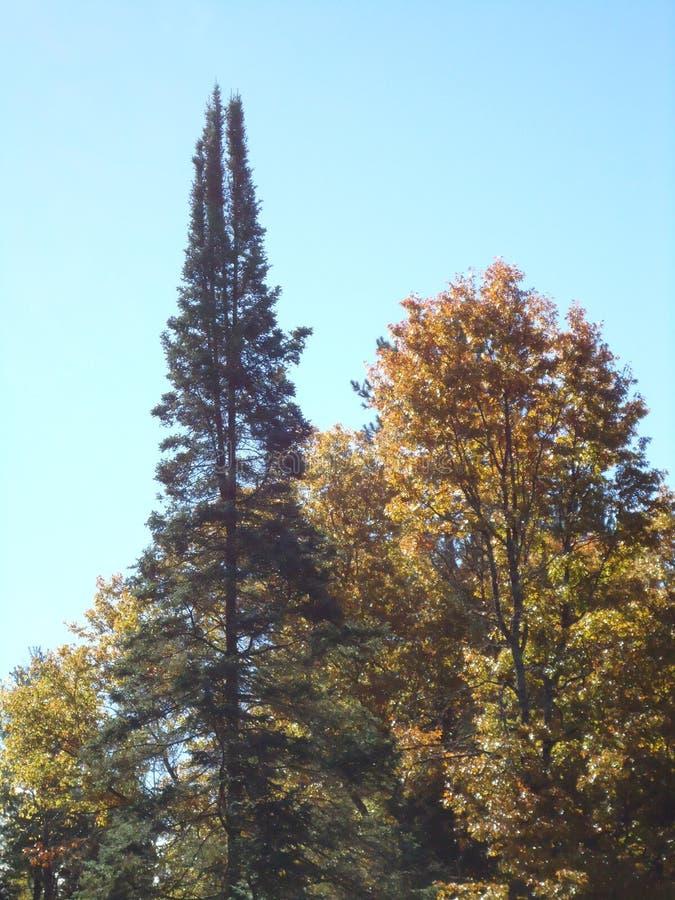Verschiedene Fall-Bäume und Farben stockfotografie