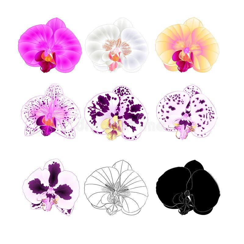 Verschiedene Farben Orchidee Phalaenopsis natürlich, Entwurf, Schattenbild, Blume zuerst auf einem weißer Hintergrundweinlese-Vek lizenzfreie abbildung