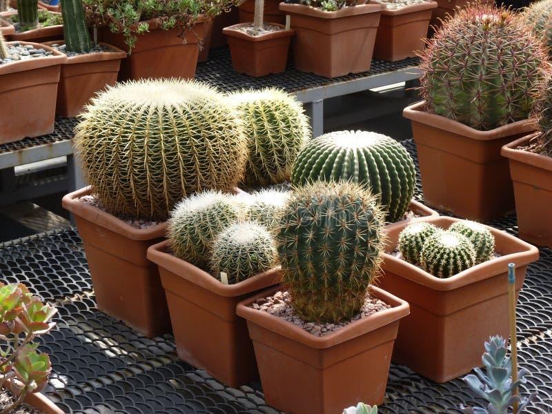Verschiedene Formen von Kakteen im botanischen Garten lizenzfreies stockfoto
