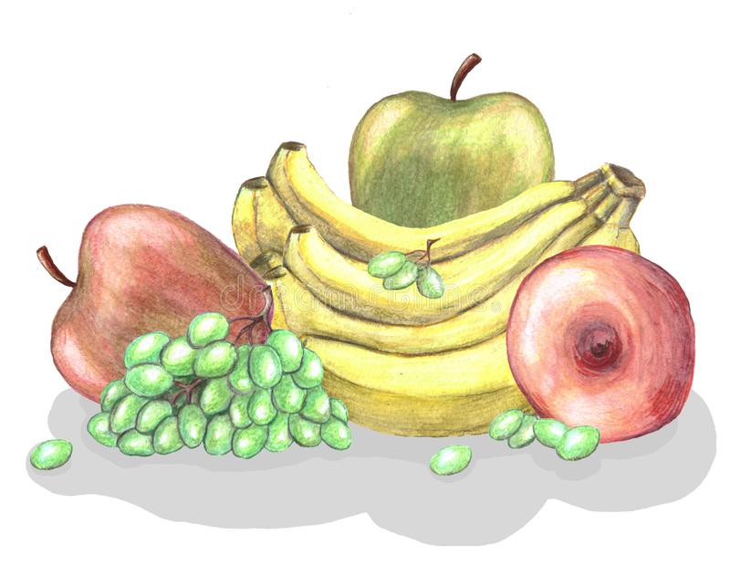 Verschiedene Früchte - Banane, Traube, Äpfel vektor abbildung