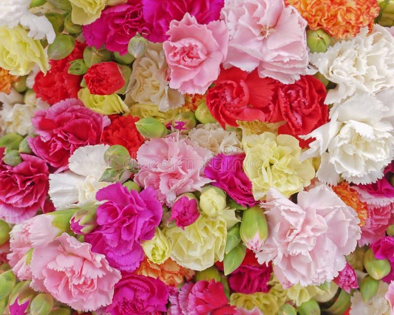 Verschiedene Gartennelkenblumen, bunter Hintergrund stockfoto