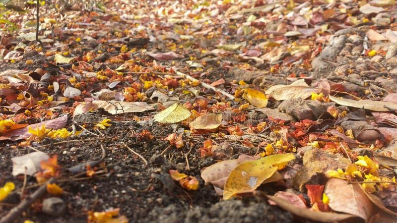 Verschiedene Herbstblätter stockfotos