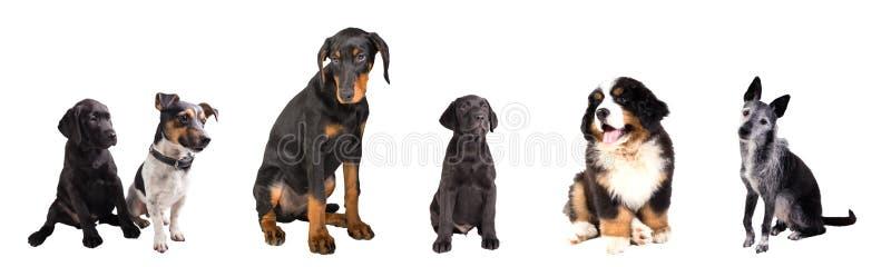 Verschiedene Hunde lokalisiert lizenzfreie stockbilder