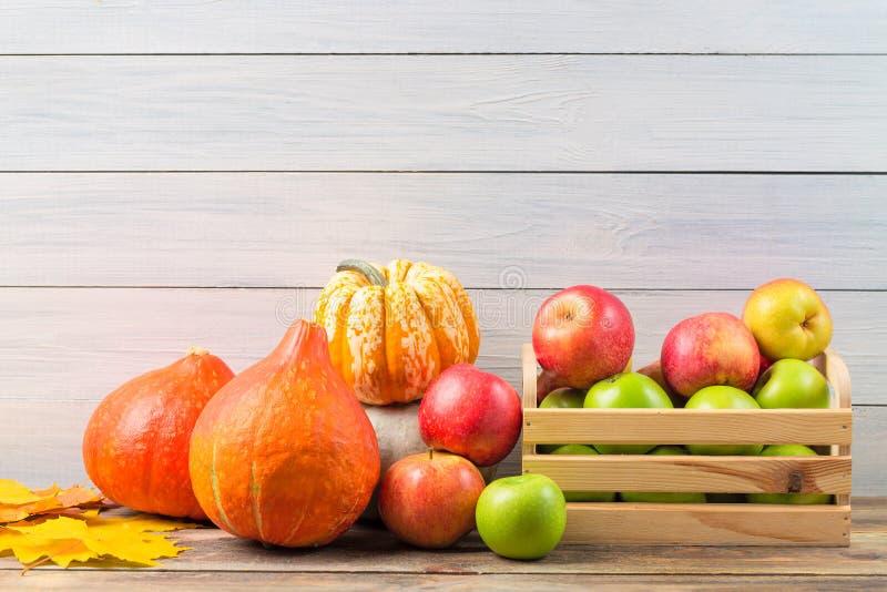 Verschiedene Kürbise mit bunten Ahornblättern und reife Äpfel in einem Kasten gegen hellen hölzernen Wandhintergrund Herbst und H stockfotos